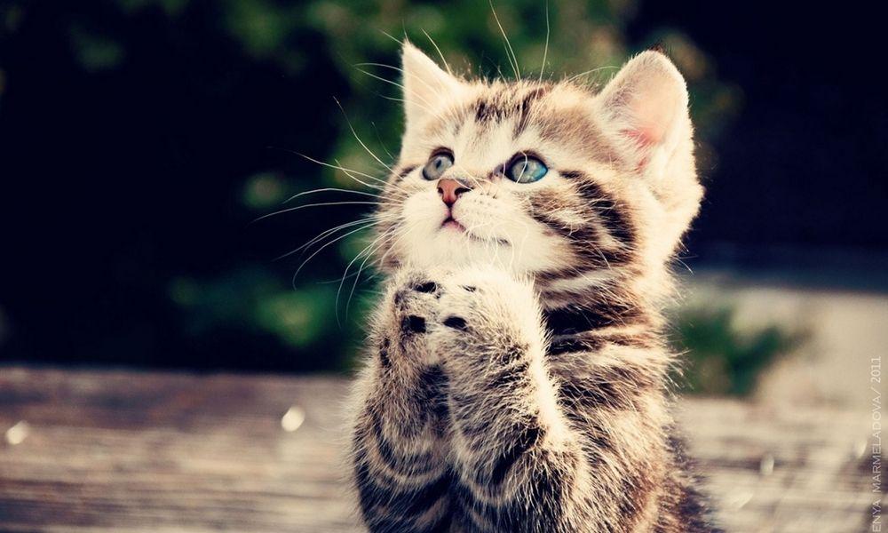 Manusia Bisa Belajar dari Kucing tentang 5 Hal ini