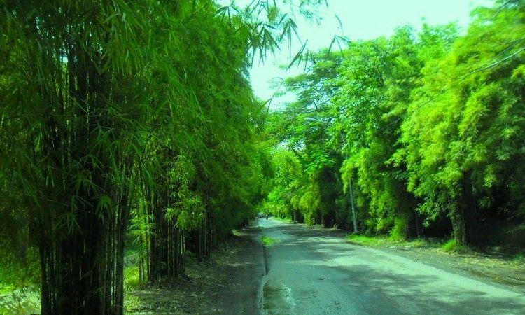 Hutan Bambu Keputih, Surabaya