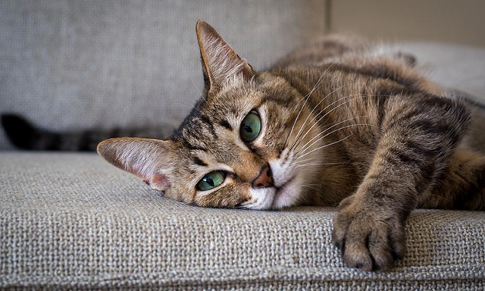 Selama ini Kita Gak Mengerti Begini Cara Kucing Berkomunikasi dengan Kita