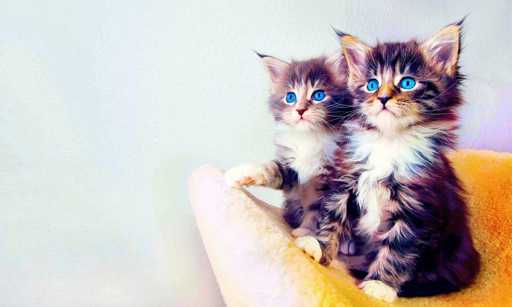 Fakta-Fakta Menarik Tentang Kucing yang Mungkin Kamu Belum Tau
