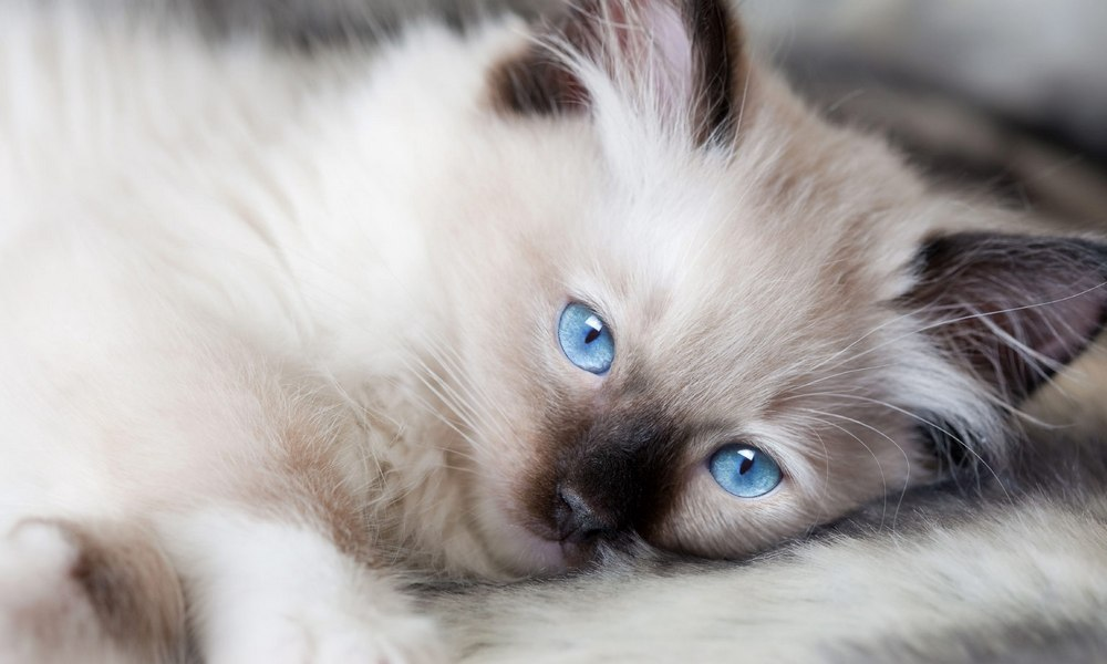 Pertama Kali Memelihara Kucing? Inilah 10 Hal yang Perlu Kamu Ketahui
